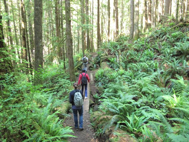 Heading into a forest, Vancouver Island